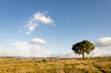 lonely oak in Sardinia