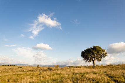 Quercia solitaria in Sardegna