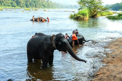 Viaje a India baño de elefantes